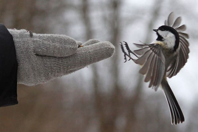 Chill with the chickadees at Woodstock's National Park