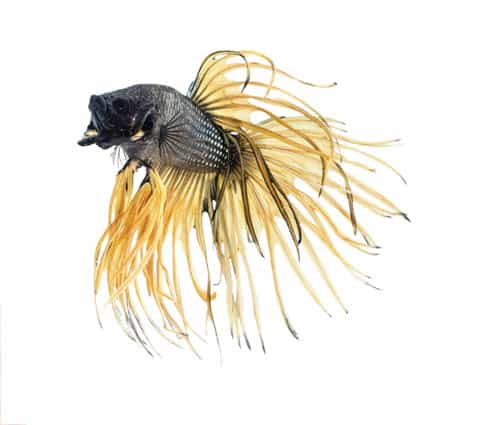 Tropical fish auction and bowl contest showcases exotic