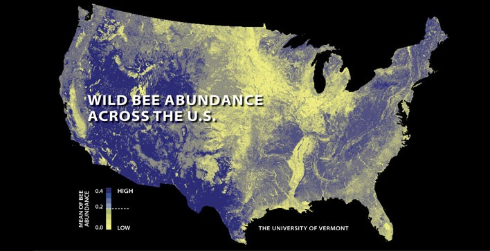 Wild bee decline threatens U.S. crop production, UVM study finds