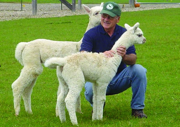 Brandon alpaca farm to host holiday open house the for Alpacas view farm cuisine