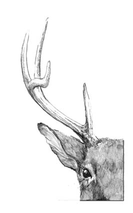 All About Antlers The Outside Story The Mountain Times