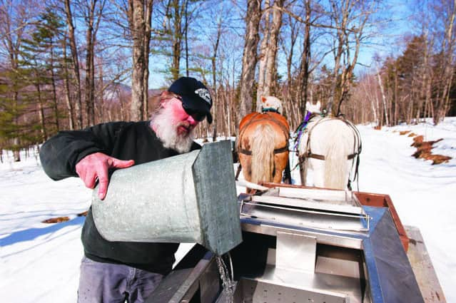 Maple syrup producers open up for final Maple Weekend