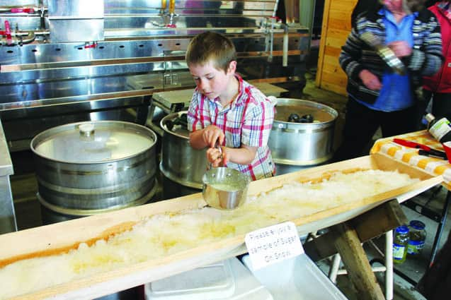 Sugaring season is off to a promising start - The Mountain Times