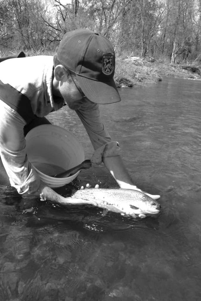 Fish stocking underway across Vermont - The Mountain Times