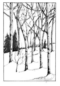 The Outside Story - Quaking Aspen- capturing winter light