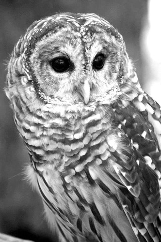 2.16-Family Owl Prowl at VINS-Courtesy of VINS