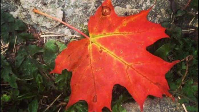 The simple beauty of autumn foliage in Vermont