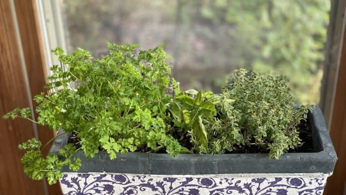 Homegrown garnishes add flavor, nutrition and eye appeal to meals