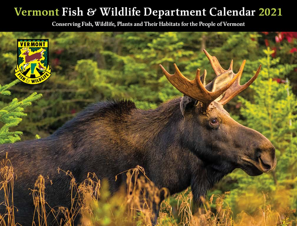 VT Fish & Wildlife's 2021 calendar available   The Mountain Times