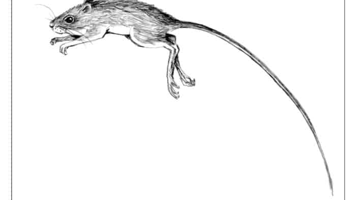 The Outside Story: Jumping mice – long tailed leapers