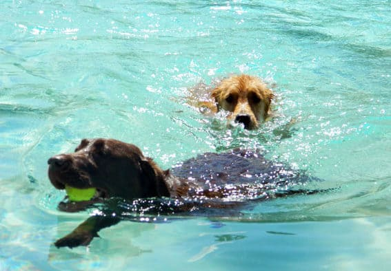Rutland county canines make a splash at Dog Days