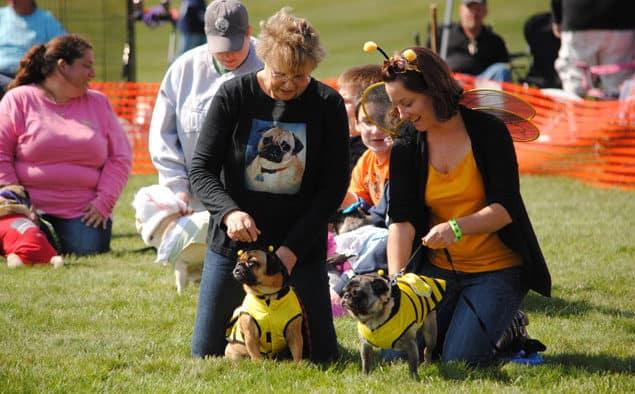 Pug Social returns to Killington