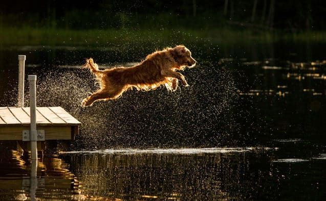 Dock diving dogs compete to benefit humane society