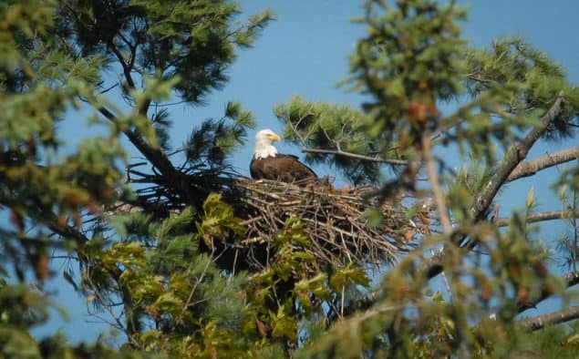 Former endangered bird species continue path of recovery