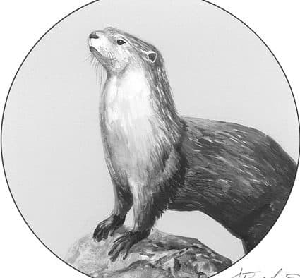 The Outside Story: Ever smell an otter?