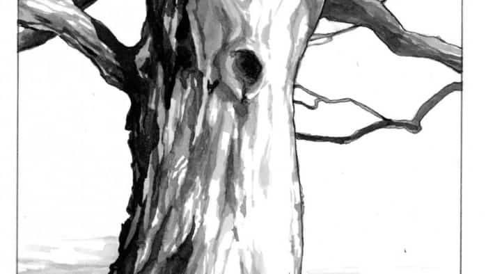 The Outside Story: Old Trees