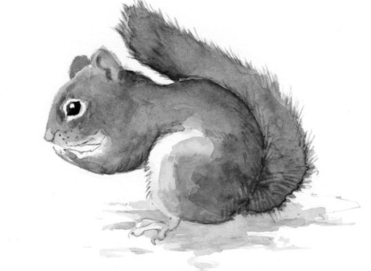 """The Outside Story: Red squirrels, """"Keep your mitts off my midden!"""""""