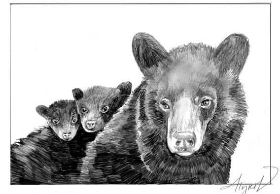 The Outside Story:  From winter to spring in a bear cub's den