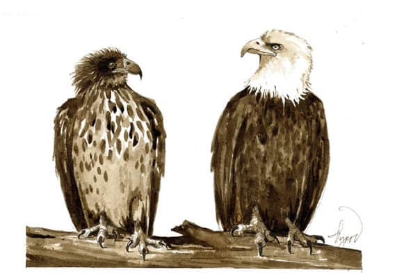 The Outside Story The education of a young bald eagle