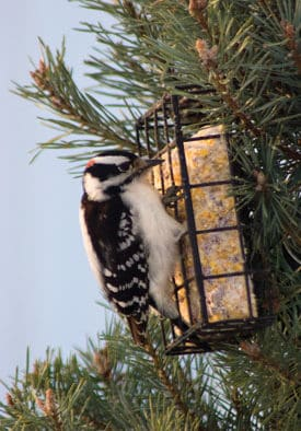 Maintaining clean bird feeders and bird baths essential to avian health