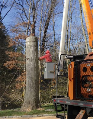 Pruning trees a job best left to the pros