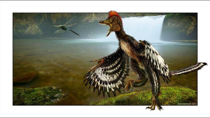 """VINS expands """"Birds are Dinosaurs"""" exhibit"""