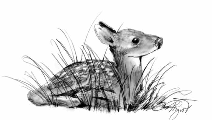 The Outside Story: Fawns hide in plain sight