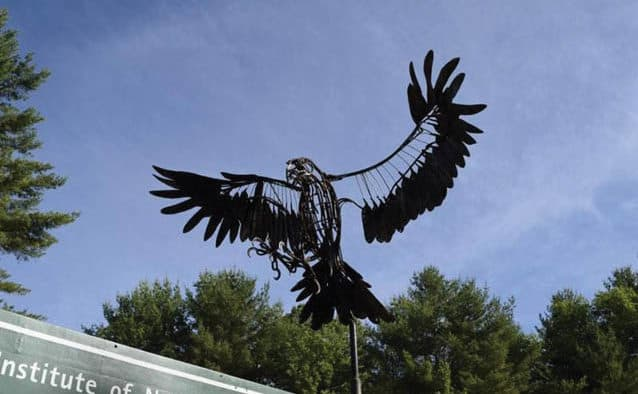 VINS honors bald eagles on national holiday