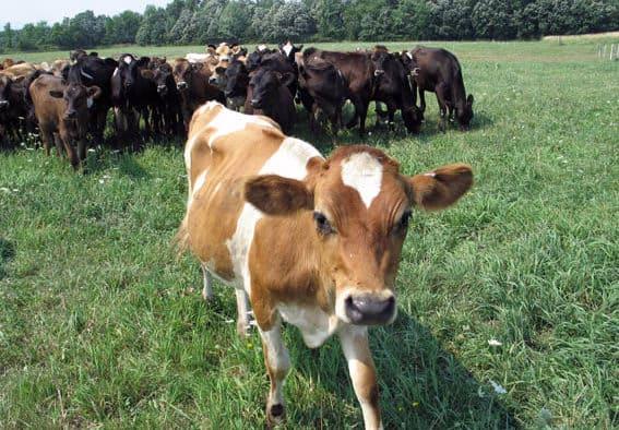 Open Farm Week celebrates origins of great food
