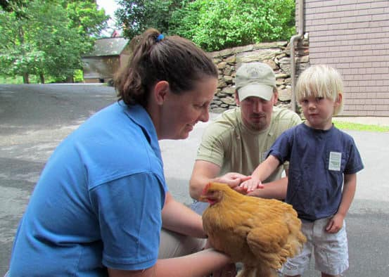 Rare chicken breeds featured at Billings Farm & Museum