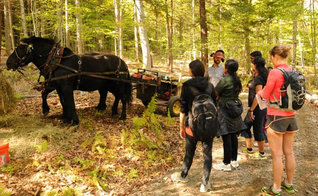 Forest Festival Weekend in Woodstock features Vermont's national park, woodcrafters