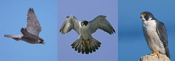 VINS celebrates Falcon Appreciation Day
