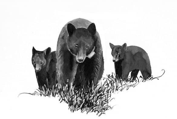 The Outside Story: The apple bears