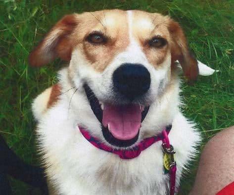 Missing dog: Lassie