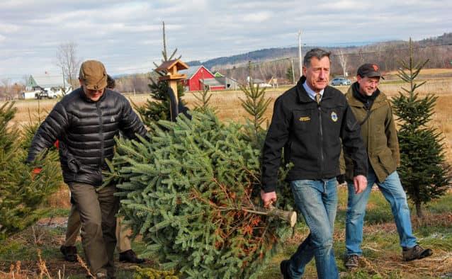 Governor Shumlin harvests the season's first Christmas Tree