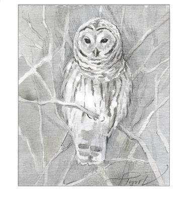 The Outside Story: Owl's winter hunt