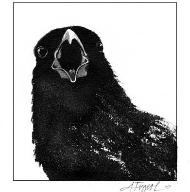 The Outside Story: Crows