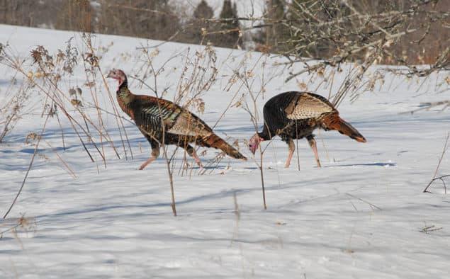 Turkey hunters had a successful year
