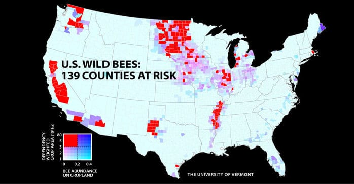 Wild bee decline threatens U.S. crop production, UVM study finds