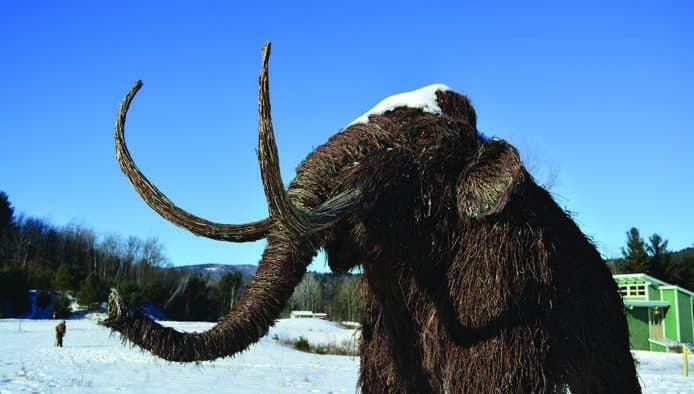 Discover Ice Age mammals at VINS walk and talk
