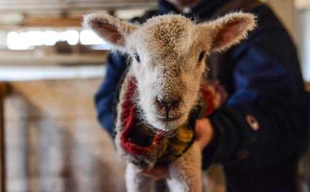 Meet the farm's new arrivals at Billings' Baby Animal Day