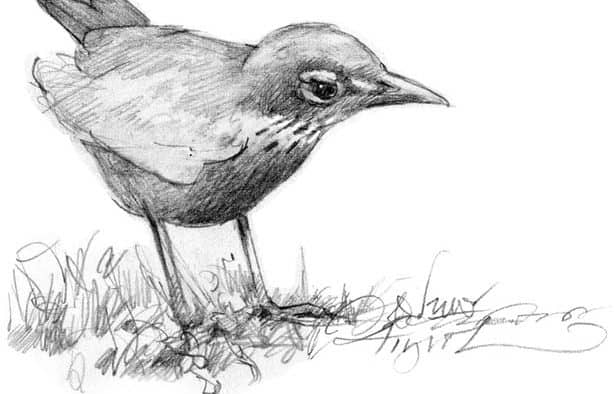 The Outside Story: A sure sign of spring: robins on the nest