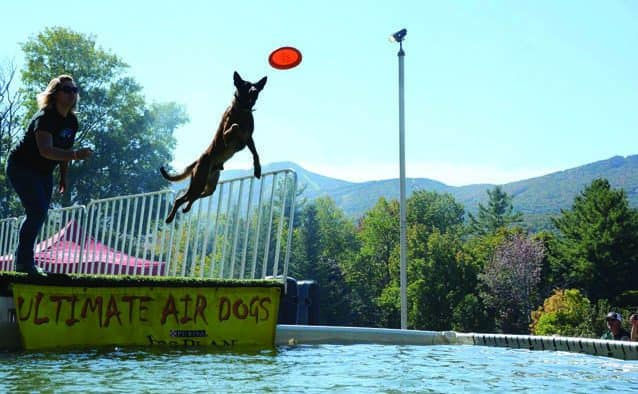Fly Dogs jumping event moves to Lake Bomoseen