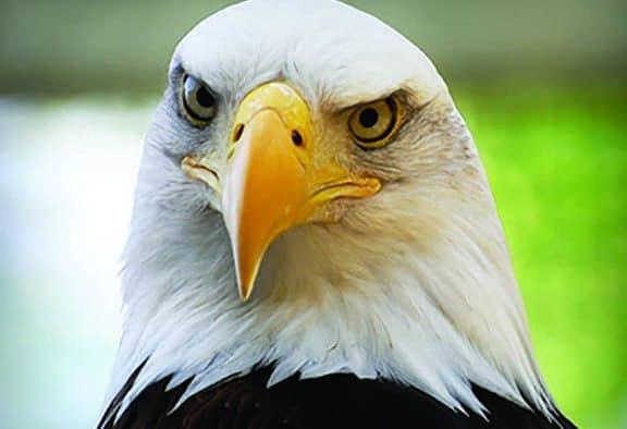 VINS honors national emblem on July 4