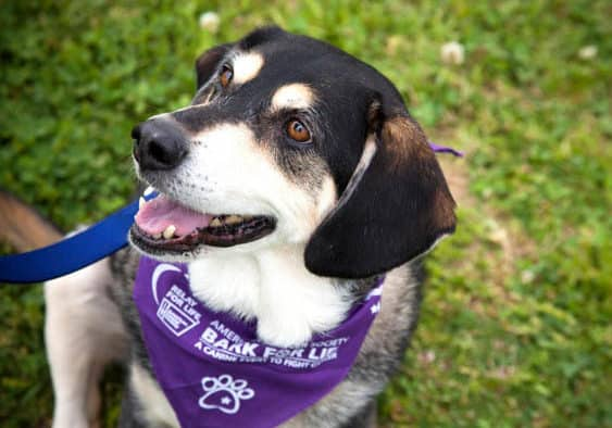 Dog lovers, furry friends fight cancer with Bark For Life