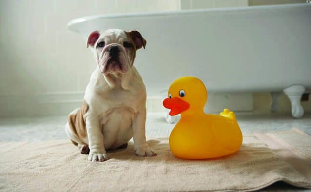 Ducks race to the finish line in support of homeless animals