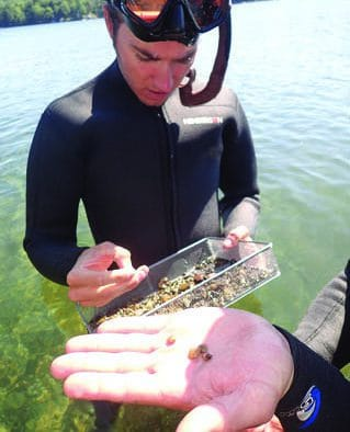 Invasive Asian Clam found in Lake Bomoseen