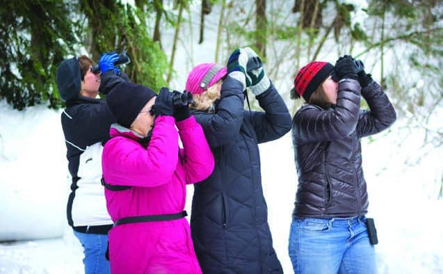 Vermont birders encouraged to join Audubon Christmas bird count