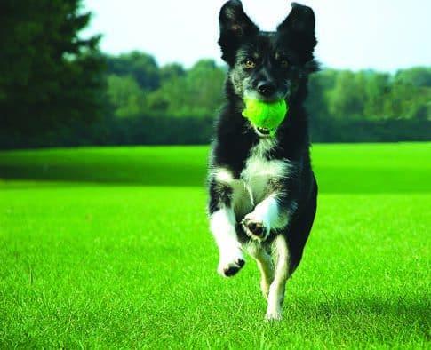 RRMC donates land for Rutland dog parks