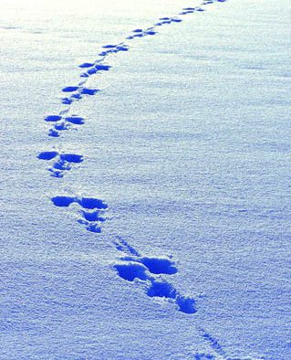 Looking for a winter activity? Track wildlife